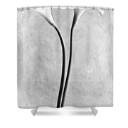 Calla Lilies, Mexico City, 1925 Shower Curtain