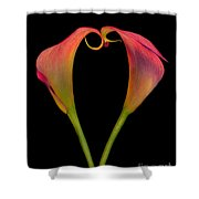 Calla Lillies Kissing Shower Curtain
