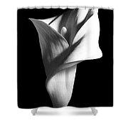 Calla Lily - 05 Shower Curtain