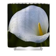 Calla Lily 3 Shower Curtain