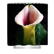 Calla Lily Droplets Shower Curtain