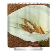 Calla Lily Gold Leaf Shower Curtain