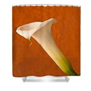 Calla Lily In Bloom Shower Curtain