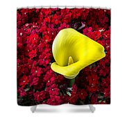 Calla Lily In Red Kalanchoe Shower Curtain