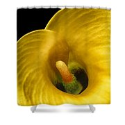 Calla Lily On Black Shower Curtain
