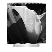 Calla Lily Named Crystal Blush Shower Curtain