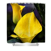 Calla Lily Portrait In Yellow And Green Shower Curtain
