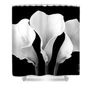Calla Lily Trio In Black And White Shower Curtain