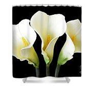 Calla Lily Trio Shower Curtain