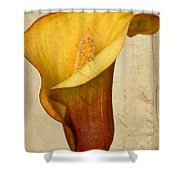 Calla Lily Vintage  Shower Curtain by Heidi Smith