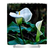 Calla Lily - Zantedeschia Aethiopica Shower Curtain