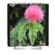 Calliandra Blossom Shower Curtain