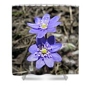 Calling Spring. Two Violets Shower Curtain