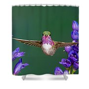 Calliope Hummingbird Stellula Calliope Shower Curtain