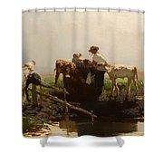 Calves At A Trough Shower Curtain