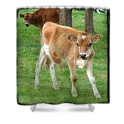 Calves Shower Curtain