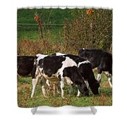 Calves Shower Curtain