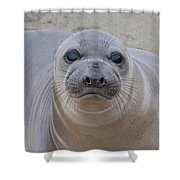 Cambria Baby Seal Shower Curtain
