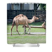 Camel And Emu Shower Curtain
