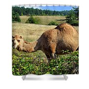 Camel In The Berry Bush Shower Curtain