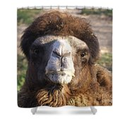 Camel Face Shower Curtain