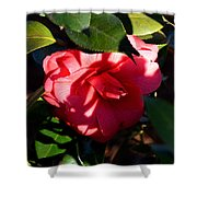 Camelia In The Shadows Shower Curtain