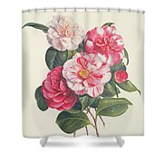 Camelias Shower Curtain by Augusta Innes Withers