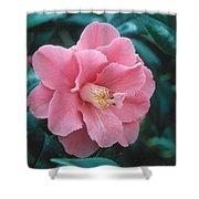 Camellia 1 Shower Curtain