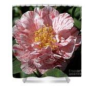 Camellia 2967 Shower Curtain