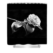 Camellia Flower In Black And White Shower Curtain by Jennie Marie Schell