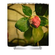 Camellia Shower Curtain by Marco Oliveira