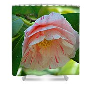 Camellia White With Pink Stripes Shower Curtain