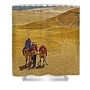 Camels Nuzzling On The Giza Plateau-egypt  Shower Curtain