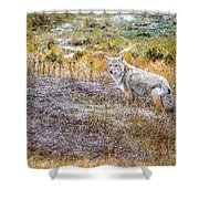 Camo Coyote Shower Curtain