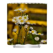 Camomille Shower Curtain