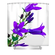 Campanula Flowers Shower Curtain
