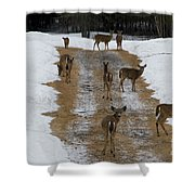 Can Deer Read Shower Curtain