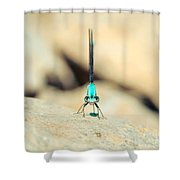 Can I Bug You Dragonfly Shower Curtain