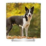 Canaan Dog Shower Curtain
