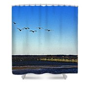 Canada Geese At Northside Park Shower Curtain
