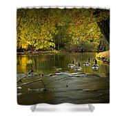Canada Geese In Autumn Swimming On The Thornapple River Shower Curtain