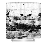Canada Geese In Black And White Shower Curtain