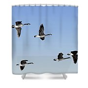Canada Geese In Flight, Algonquin Park Shower Curtain