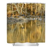 Canada Geese On A Golden Morning Shower Curtain