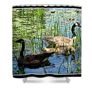 Canada Geese On Lily Pond At Reinstein Woods Shower Curtain