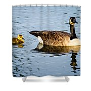 Canada Goose And Gosling Shower Curtain