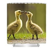 Canada Goose Babies Shower Curtain