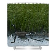 Canada Goose Family   #7453 Shower Curtain