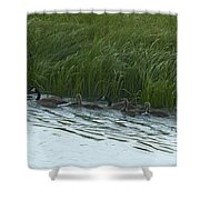 Canada Goose Family   #7478 Shower Curtain