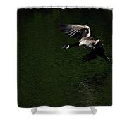 Canada Goose In Flight Shower Curtain